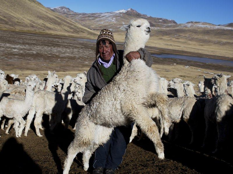 It's Time to Unlink Alpaca Importation from It's Economic Appendage